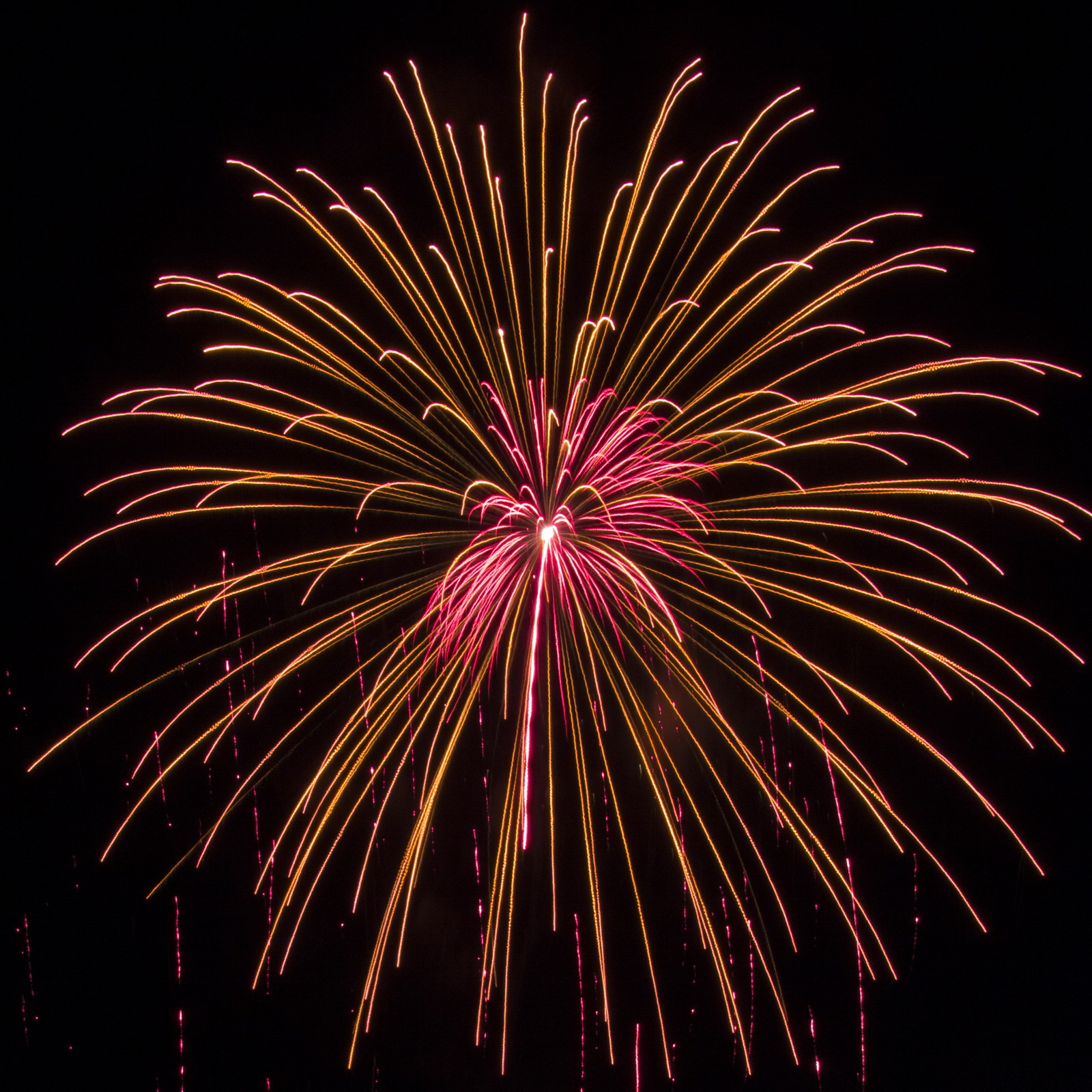 Massachusetts Fireworks go2.guide gold and fuscia explosion