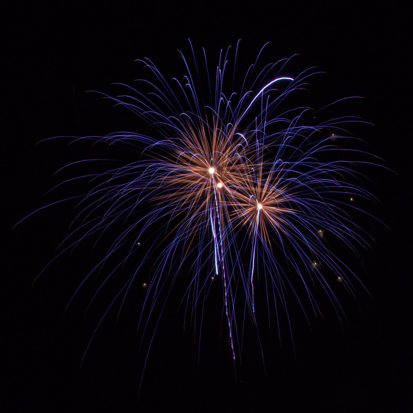 Cape Cod Fireworks: purple with a gold heart