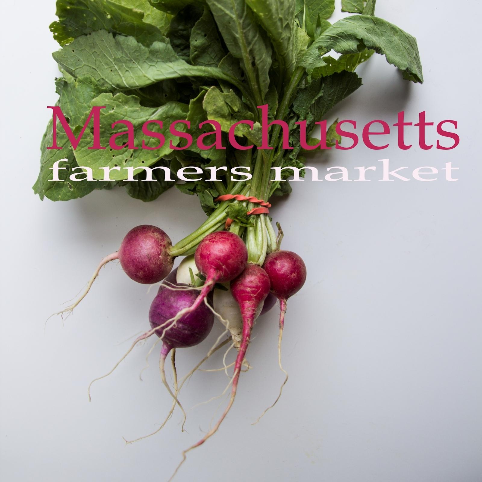 Massachusetts Farmers Markets Square - Radishes