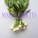 Organic Turnips for Massachusetts Farmers Markets Photo Gallery